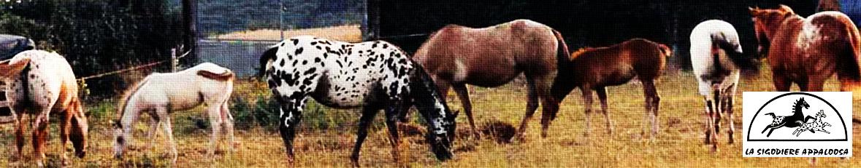 bandeau_chevaux